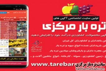 بارفروشان میوه و تره بار در تهران و سایر میادین میوه و تره بار